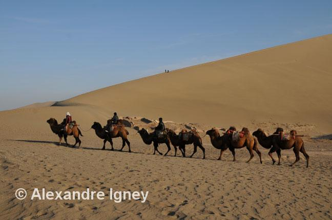 china-dunhuang-camels