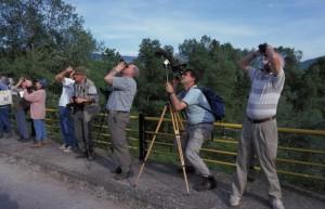greece-nestos-birdwatchers