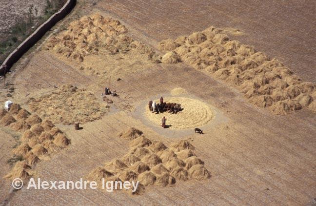 ladakh-farming-fields
