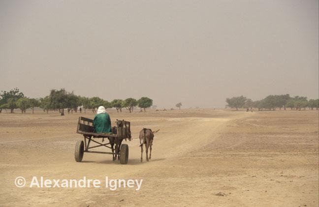 mali-donkey-cart