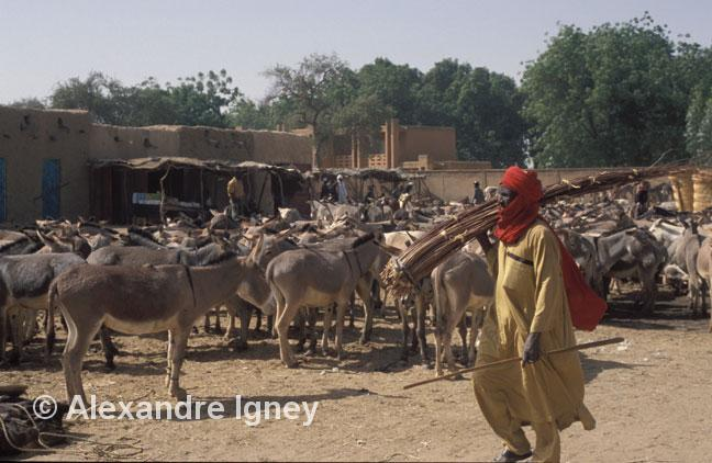 niger-animal-market