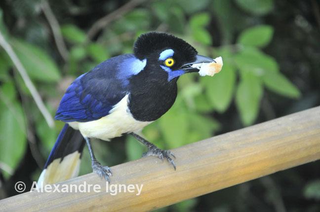 argentina-iguazu-bird