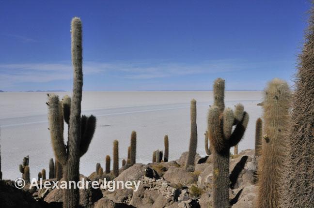 bolivia-salaruyuni-cactus