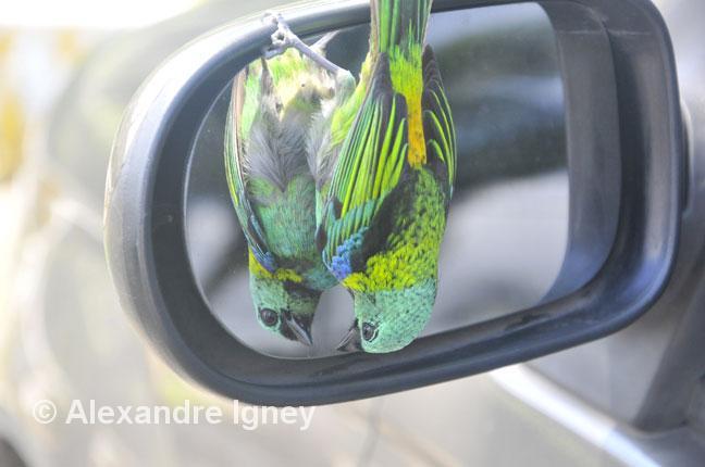 brazil-morretes-bird