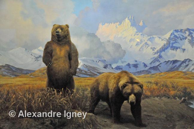newyork-americanmuseumofnaturalhistory-brownbear