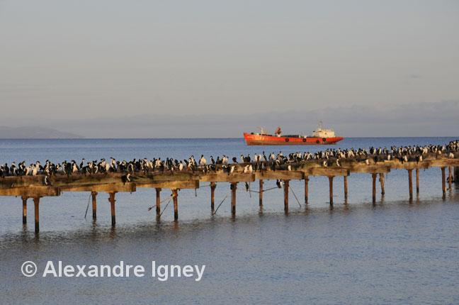 patagonia-birds-port