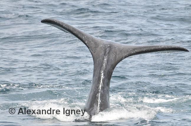 patagonia-peninsulavaldes-whale