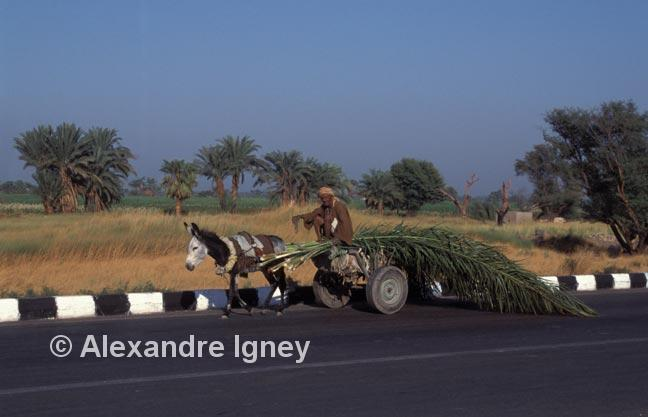 egypt-cart-farmer