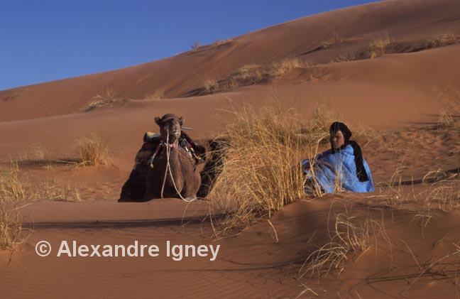 morocco-desert-camel