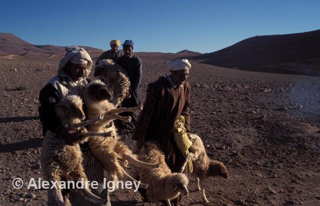 morocco-sheep-market