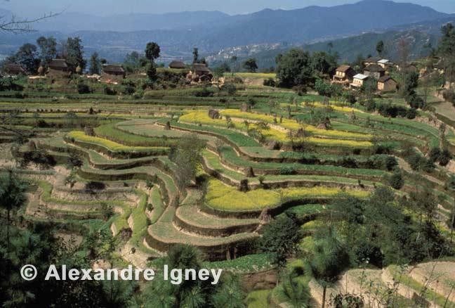 nepal-farming-fields