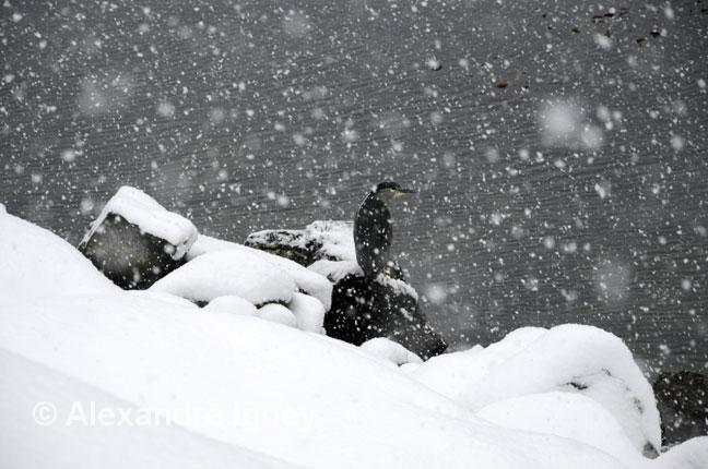 tierradefuego-ushuaia-bird